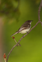 research:topics:image-based_3d_reconstruction:bird_input.png
